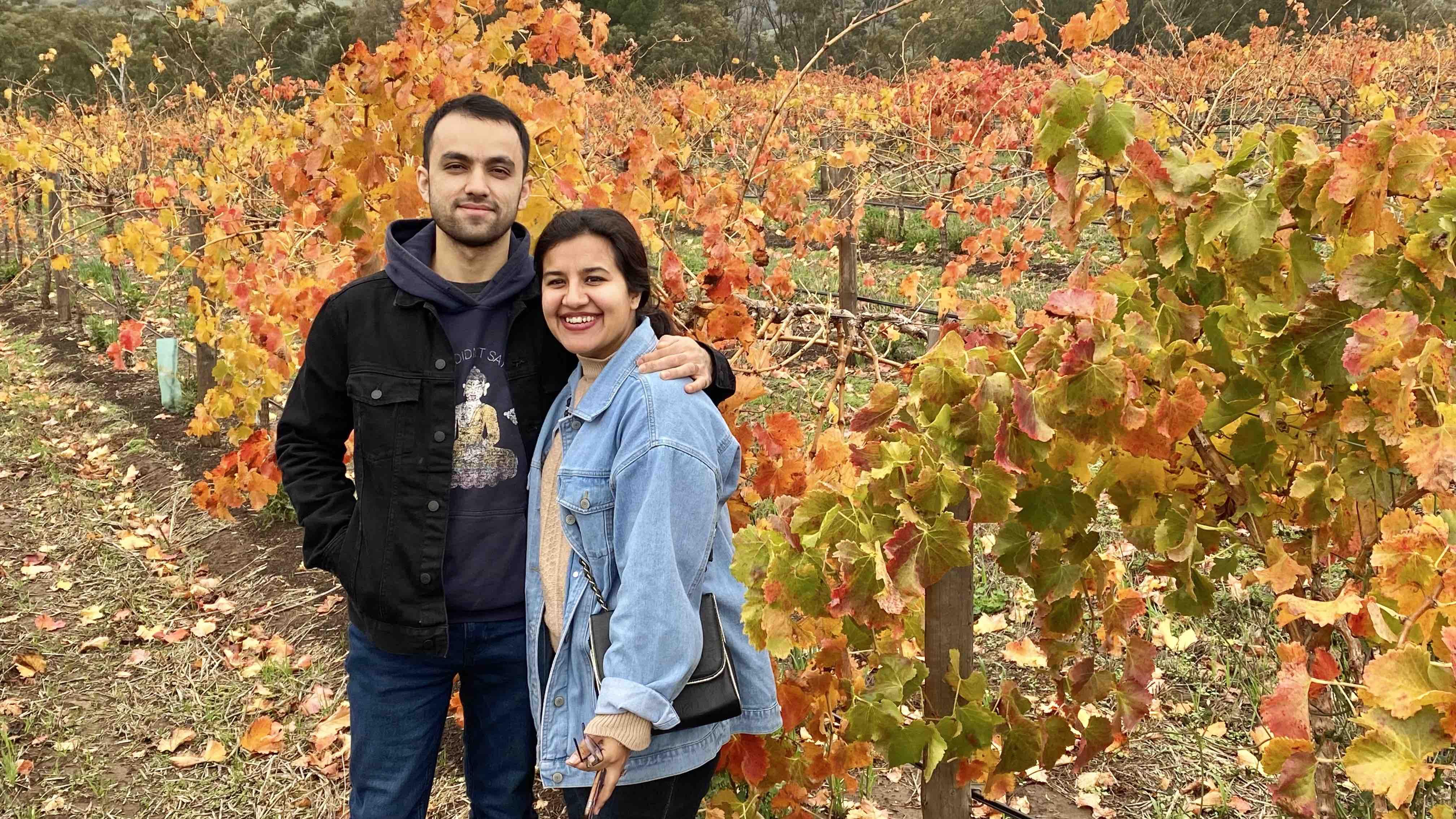 vineyards at barossa valley wine region